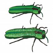 The Emerald Ash Borer: Eating and Bringing Death to Your Mountain Ash Trees Since the 90s. These Insects Eat the Leaves, Burrow into the Bark, and Critically Maim and Destroy Your Poor Ash Trees. poster