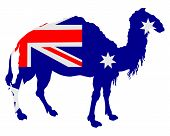 Detailed and colorful illustration of flag of Australia with camel poster