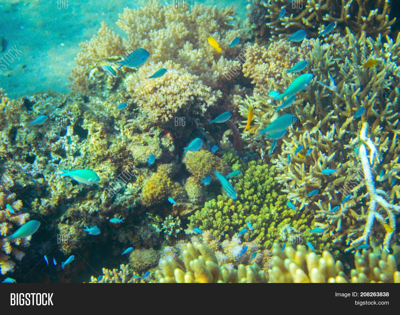 Small Neon Fish Coral Reef. Image & Photo | Bigstock
