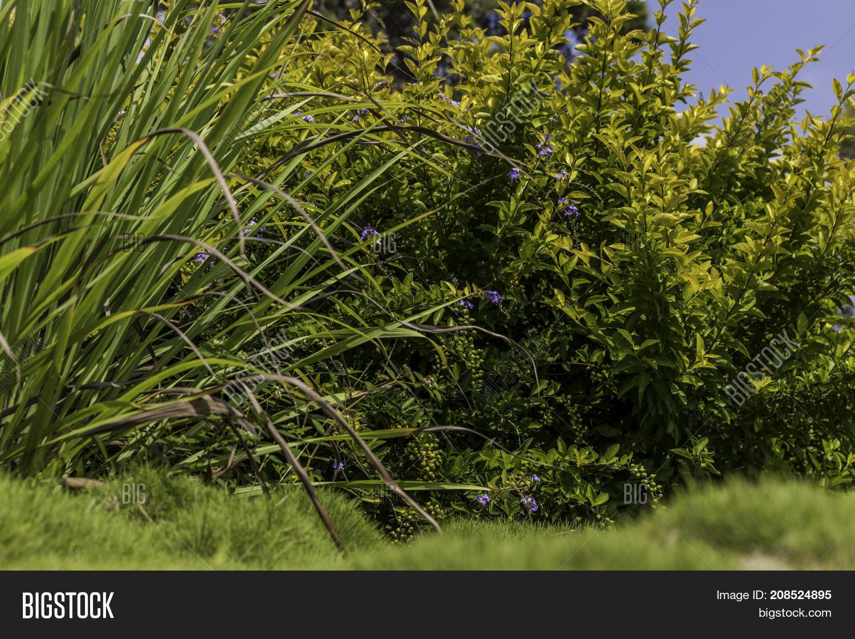 Green Yellow Bushes Image Photo Free Trial Bigstock