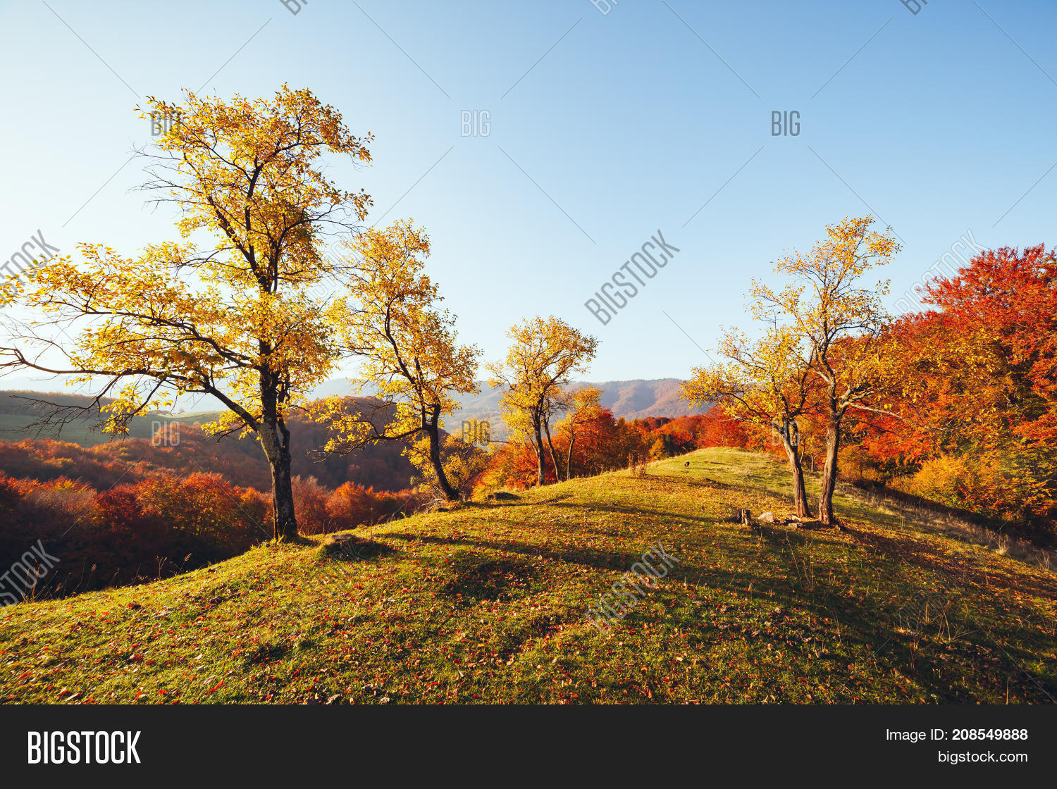 Stunning Image Bright Image Photo Free Trial Bigstock