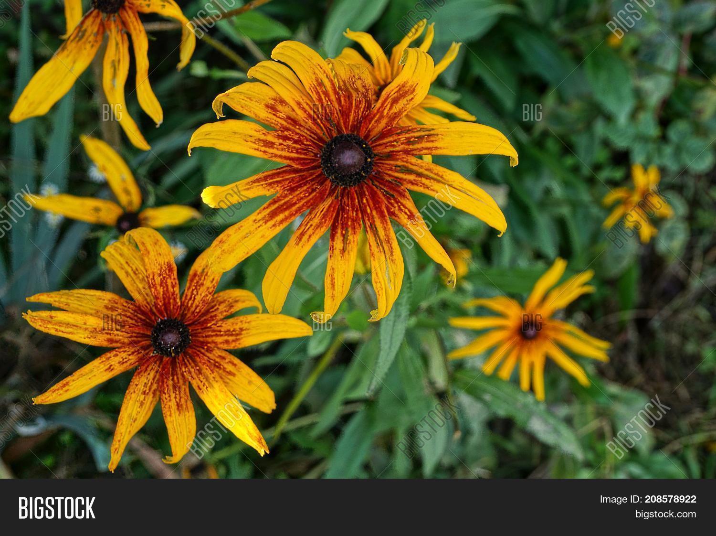 Beautiful Bright Image Photo Free Trial Bigstock