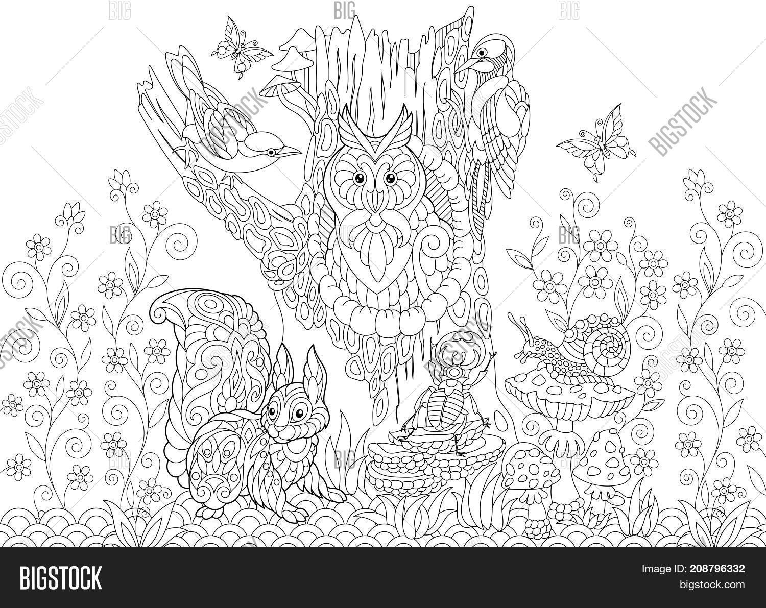 Coloring Page Of Forest Animals Owl Cuckoo Bird Woodpecker Squirrel Snail Stag Beetle Butterflies