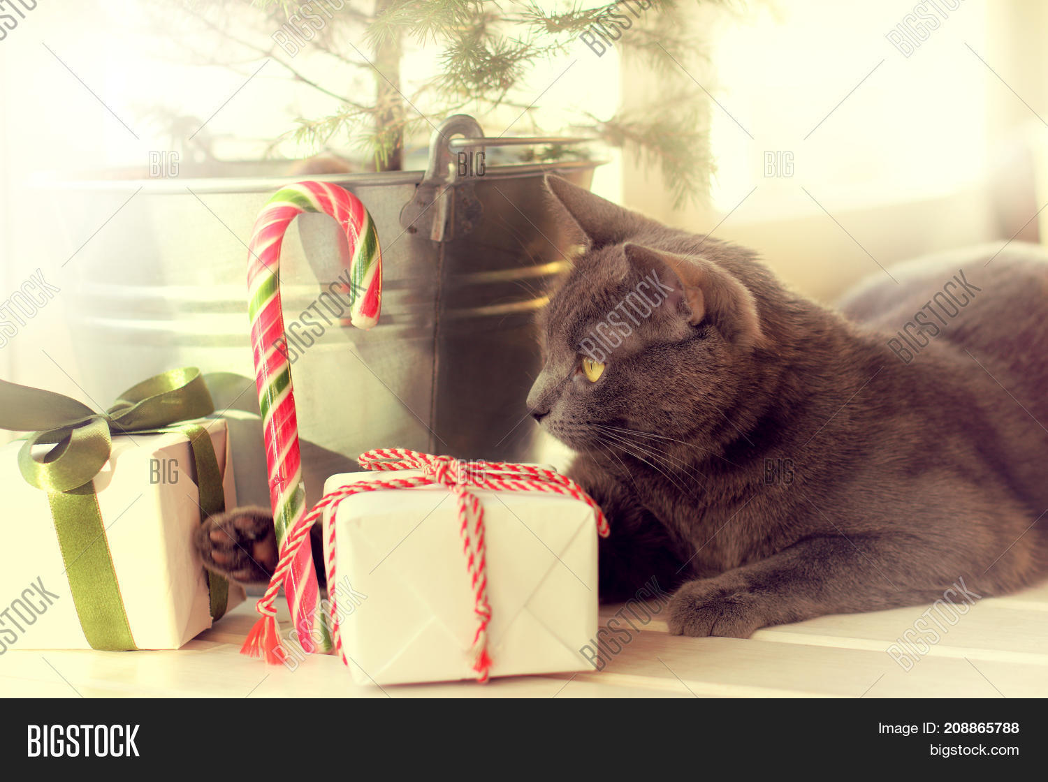 cat playing with gifts under a christmas tree on a window background happy winter vacation