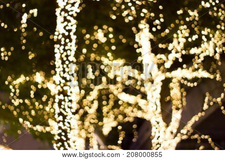 Decorative outdoor string lights hanging on tree in the garden at night time - decorative christmas lights - happy new year