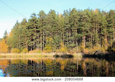 Autumn nature. Autumn forest. The autumn woods. Russian forest. Nature Reserve. Golden autumn. Lake in autumn forest. Autumn forest reflected in the lake in september. Autumn landscape. Russian forest in autumn. The lake in Russia