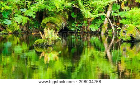 Lush greenery reflection in water surface of premeval forest lake, Boubin, Sumava Mountains, Czech Republic.
