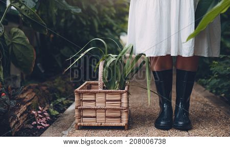 Gardener In Greenhouse With Plants In Basket On Floor