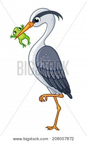 The heron in a beak holds a frog. Vector illustration with cute bird on white background.