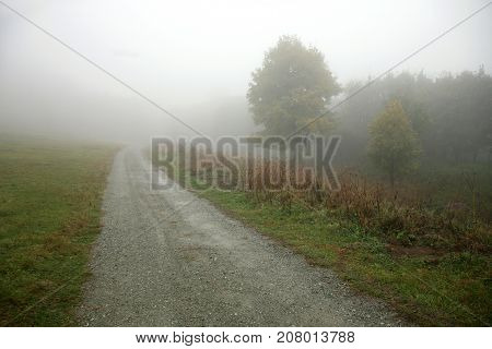 Country road going in to the fog. Maple tree in the fog.