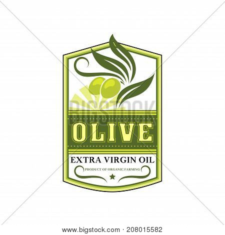Olive oil extra virgin product icon template of green olives for cooking oil bottle packing label design template. Best quality organic cooking olive oil vector isolated leaf, ribbon and star