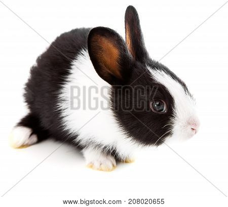 one young rabbit on white a background