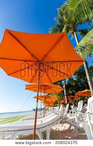 Many chairs and umbrella on sea beach under swaying palms