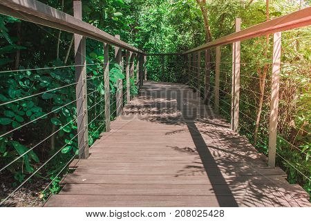 Wooden sky walk or walkway cross over treetop surrounded with green natural and sunlight background in vintage style.