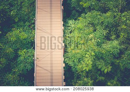 Top view wooden sky walk or walkway cross over treetop surrounded with green natural in vintage style.