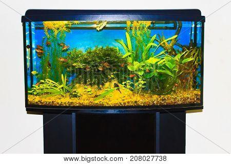 The close up of aquarium tank full of fish