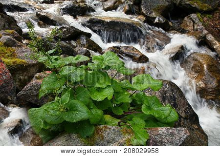 Fast Stream Of The Mountain River