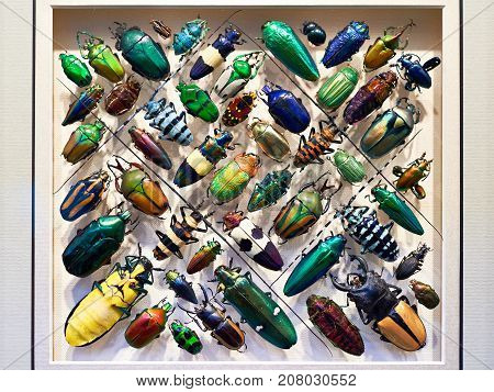 Beautiful Collection Of Beetles