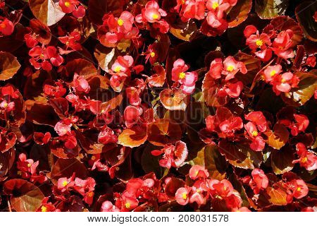 Flowers and leaves of red tone, top view.