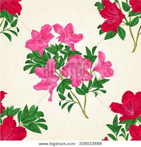 Seamless texture red and pink rhododendron twig mountain shrub vintage vector illustration editable hand draw