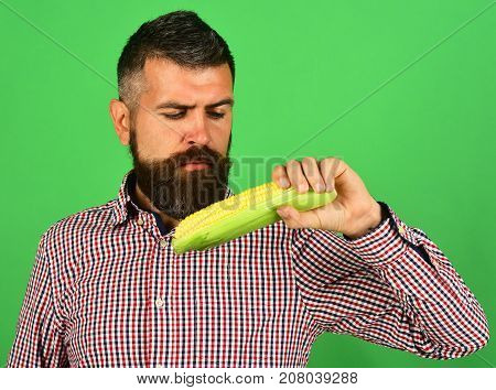 Farmer With Interested Face Holds Yellow Corn In Hand.