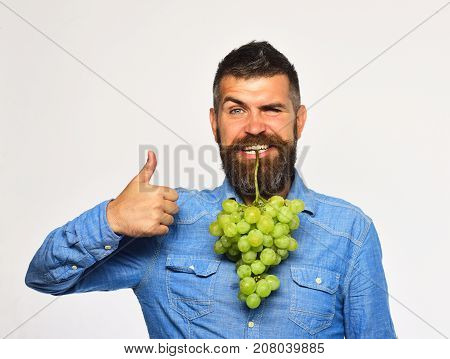 Viticulture And Gardening Concept. Man With Beard Holds Green Grapes