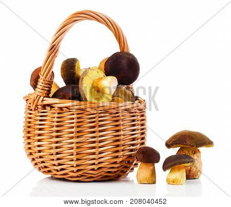 edible mushrooms in a basket on a white background