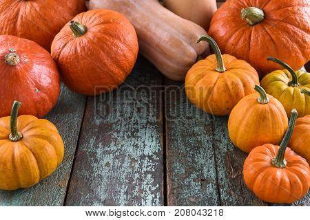Helloween Harvest Festival Thanksgiving. Bright orange pumpkins on robin egg blue background copyspace