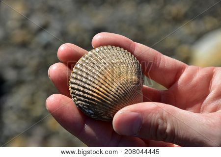 A close up image of a hand holding a dirty clam shell.