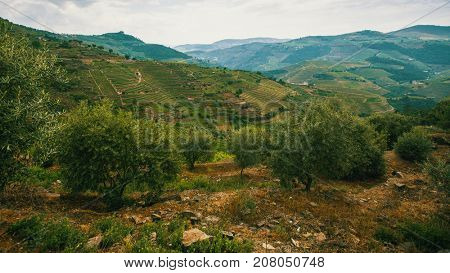 Top view of the vineyards are on a hills, Douro Valley, Portugal.