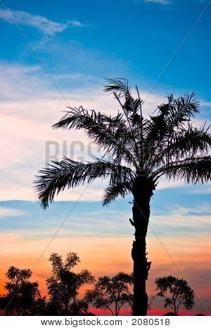 Beautiful Palm Tree Silhouette In The Dawn.Cr2