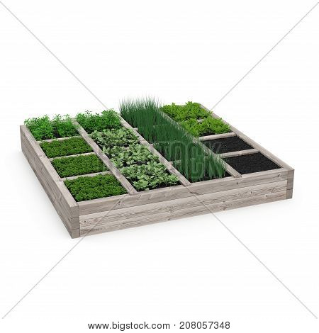 Wooden box with a young garden on white background. 3D illustration
