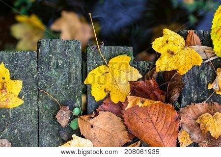 Dry fall off leaves as foliage carpet on a wooden board surface above the river water as autumn season background