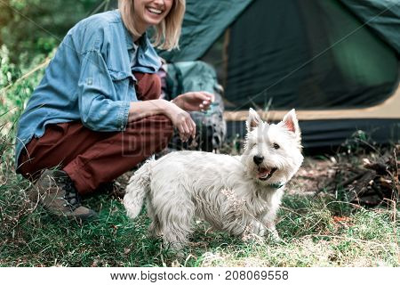 Focus on happy dog playing on grass with enjoyment. Young woman is kneeling near it and laughing. Touristic tent on background