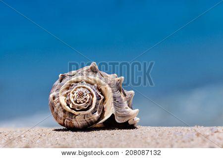 Close up of Tropical Seashell with sea as background in Cancun Mexico Vacation Concept
