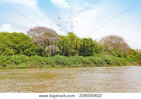 Pantanal Landscape With The Rive, Birds And Green Vegetation