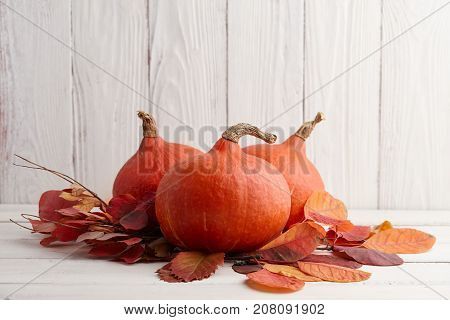 Red Japanese pumpkins hokkaido for Halloween and Thanksgiving, holiday decoration