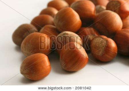 Hazel Nuts From The Fall