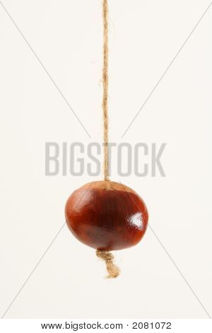 Conker Hanging On String