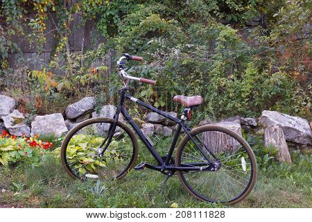 A bicycle with upright handles bars and leather seat in a garden with nasturtiums, vines and decorative rocks.
