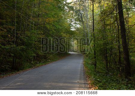 A paved road through a deciduous forest with some leaves turning yellow. Some dappled sun is seen on the road. Ground cover is green.