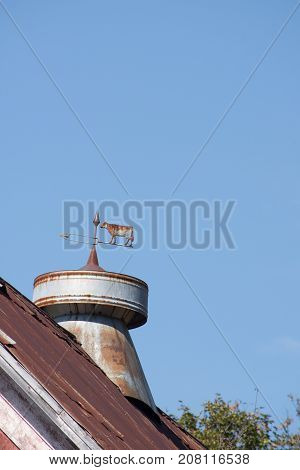 Close up of a vintage weather vane with a cow and arrow made of metal on top of a rustic weathered red barn roof. Image has copy space.
