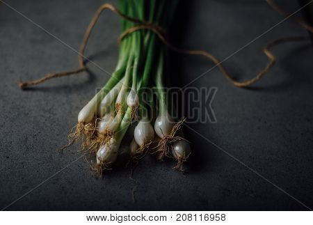 A bunch of freshly picked organic spring onions tied with a string. A rustic closeup shot on dark background.
