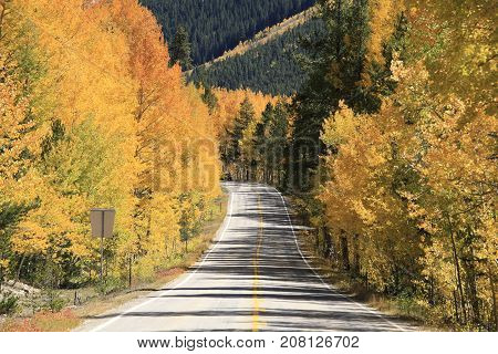 Autumn: Golden trees along the US route 82 in Rock Mountain