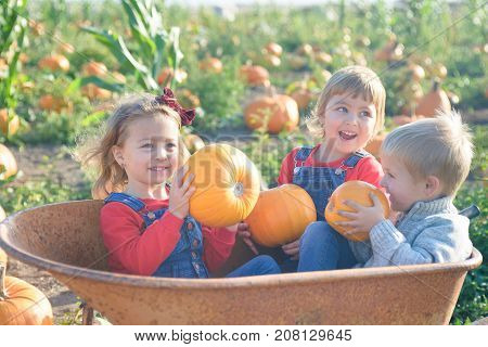 Happy kids in jeans overalls sitting inside old wheelbarrow at farm field pumpkin patch, playing and laughing
