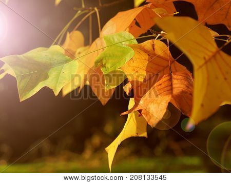 Seasonal background with golden leaves and bright sunlight