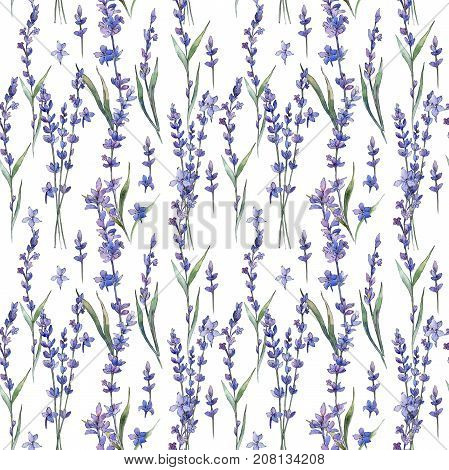 Wildflower lavander flower pattern  in a watercolor style. Full name of the plant: lavander. Aquarelle wild flower for background, texture, wrapper pattern, frame or border.