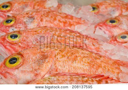 Bigeye Ocean Percal fish at fish market in Sydney New South Wales Australia