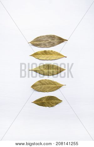 Dried bay leaves isolated on white wooden background with copy space.