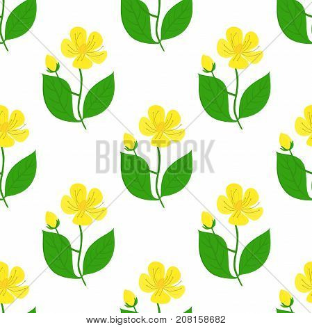 St. John's wort seamless pattern, hypericum, yellow flower. Medical herb, organic plant. Made in cartoon flat style. Vector illustration